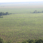 7-Eleven RENEW Reforestation Project