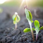 7-Eleven RENEW Biomass Project