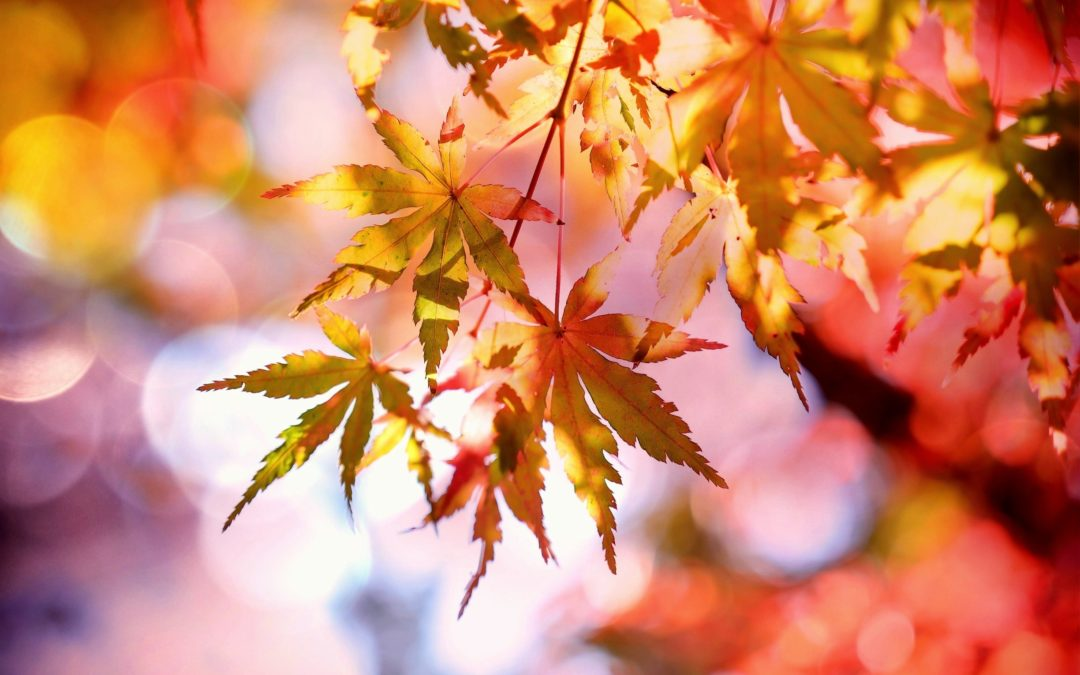 5 Eco-Friendly Fall Tips