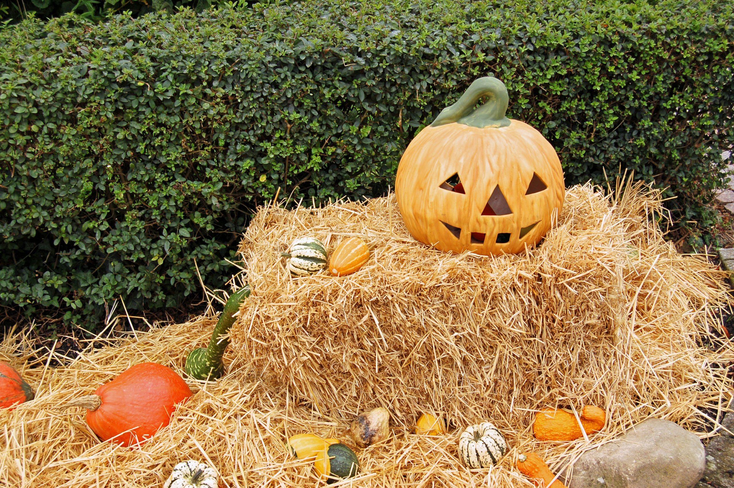 happy, green halloween