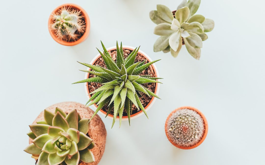 How To Grow Beautiful Windowsill Succulents