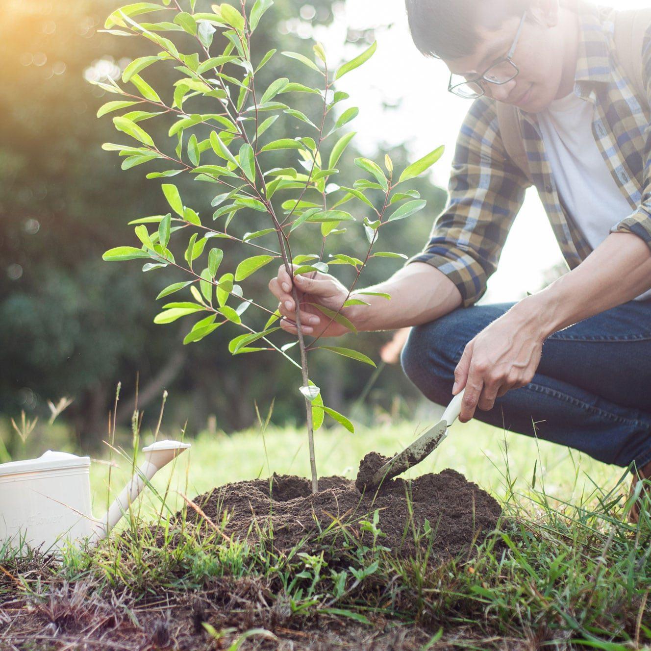 thrive_community_nashville-tree-foundation